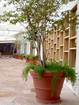 Interior design planters