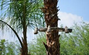 Tree Ring on palm tree