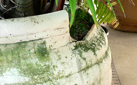 Shattered Stone Planter