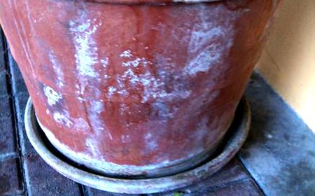 Corroded Terracotta Planter