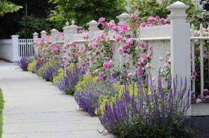 5 Great Ideas For Landscaping On A Busy Street