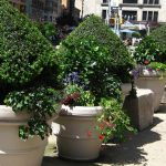 Tree Pots: How to Successfully Plant Trees in Planters