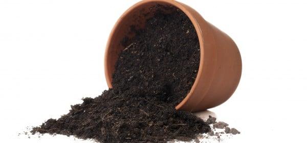 Choosing The Right Planter Soil