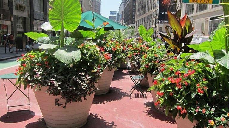 Large Planters in New York City