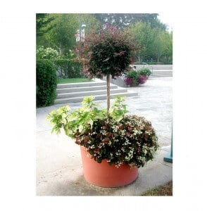 outdoor planter with pruned bush