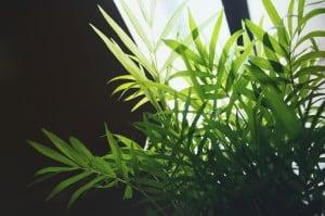 Indoor Plants Light Requirements
