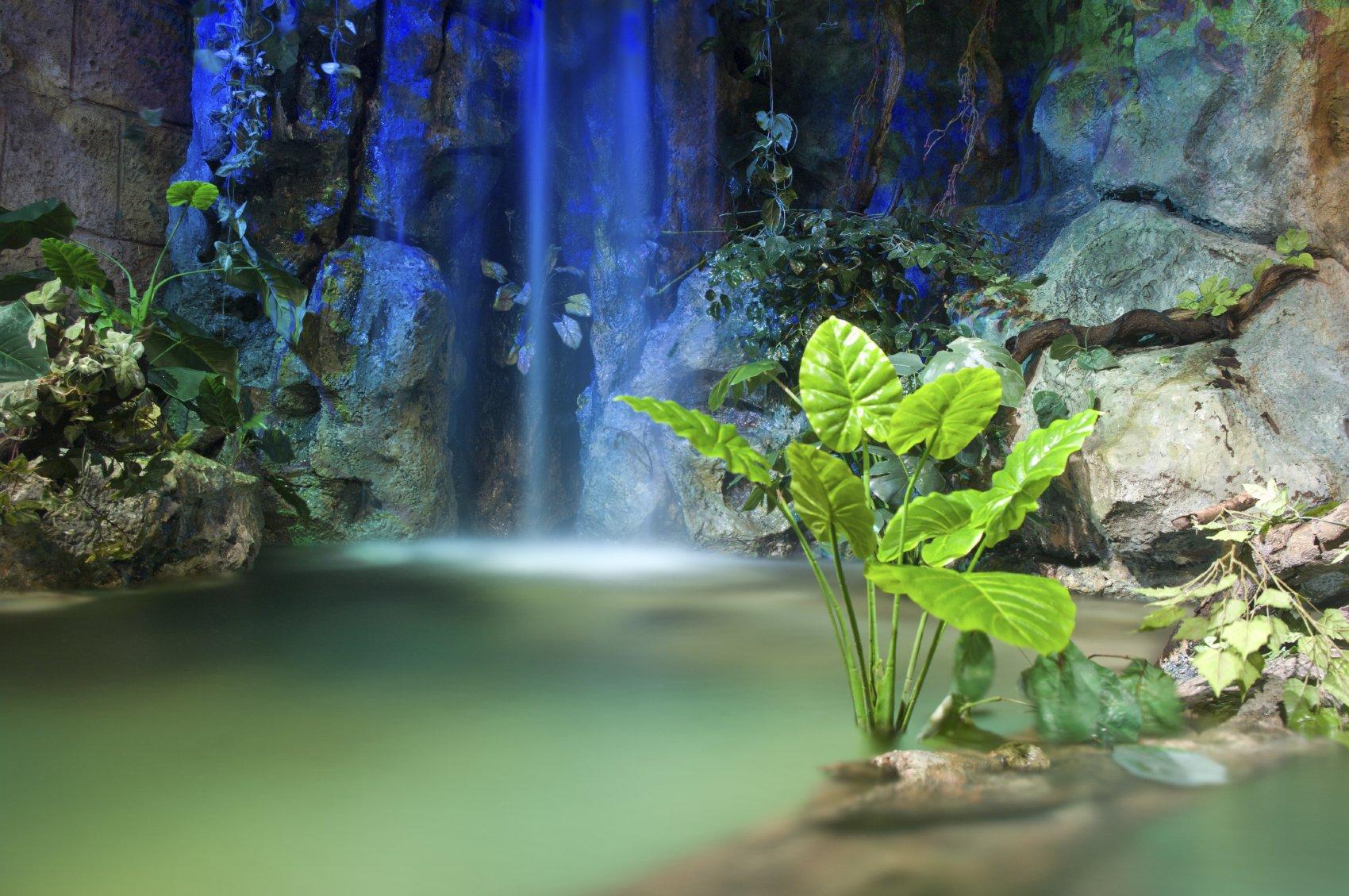 Interior Tropical Design
