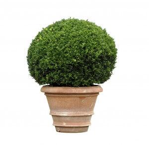 Best Plants For Commercial Planters