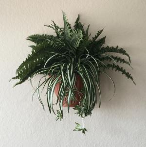Tuscany Planter 3