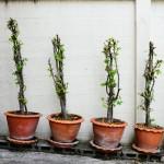 dead-plant