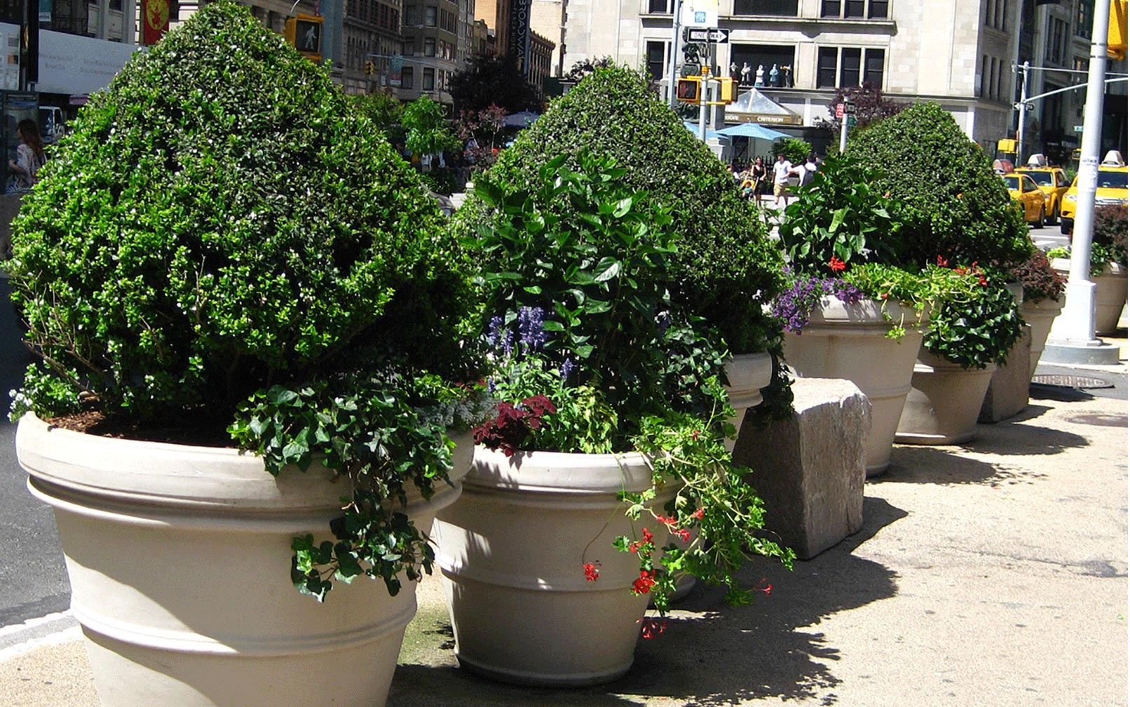 How To Maintain Large Commercial Planters