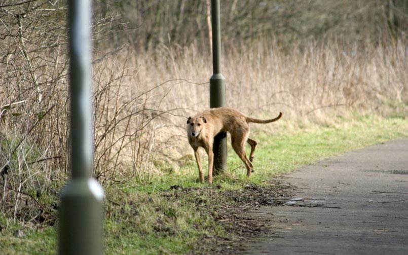 Dog Pee Is Causing City Lampposts To Topple Over, Here's How You Can Prevent It