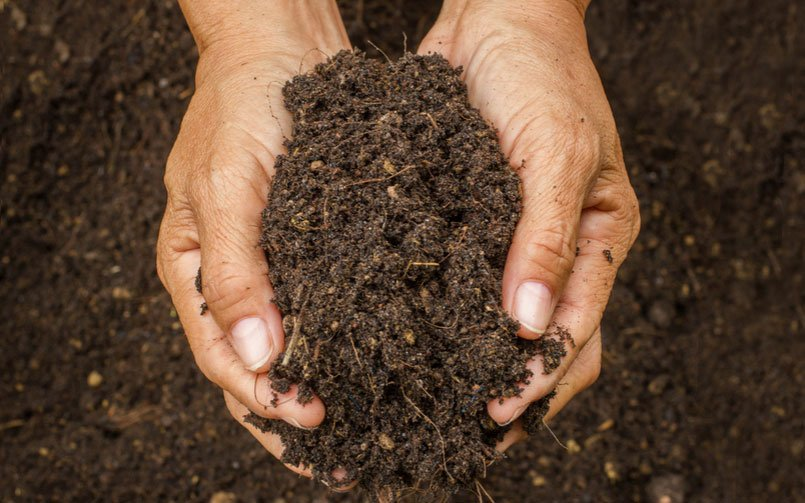 What is the Best Soil to Use in Commercial Planters?