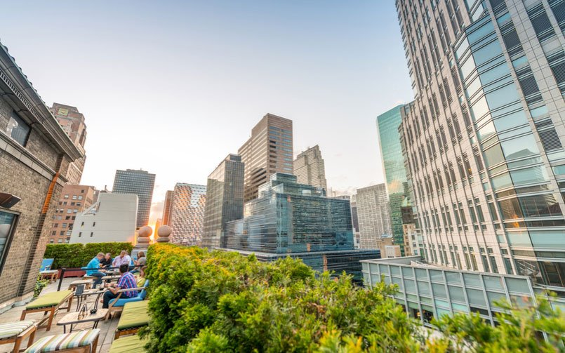 How to Pick the Best Roof Garden Plants