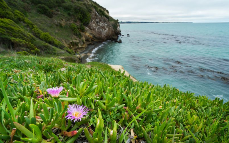 9 Coastal Landscaping Solutions to Solve Any Issue