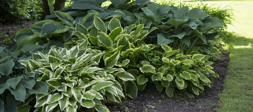 Here Are Some of the Best Plants for Public Spaces