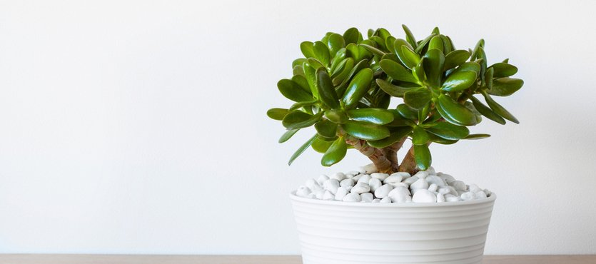 5 of the Best Indoor Plants for Direct Sunlight