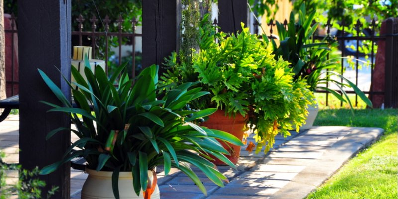 How Self-Watering Planters Help You