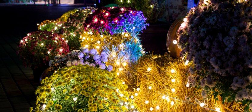 Using Planters in Holiday Design Décor