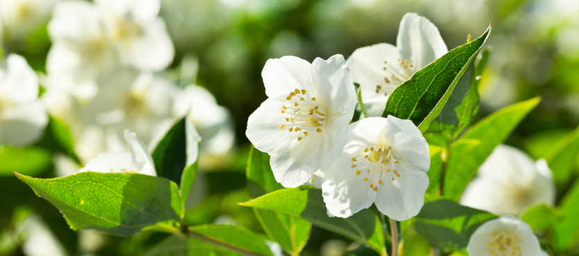 Want Winter Blooms? These Plants Come Through