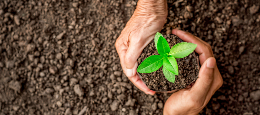 The Importance of Proper Soil