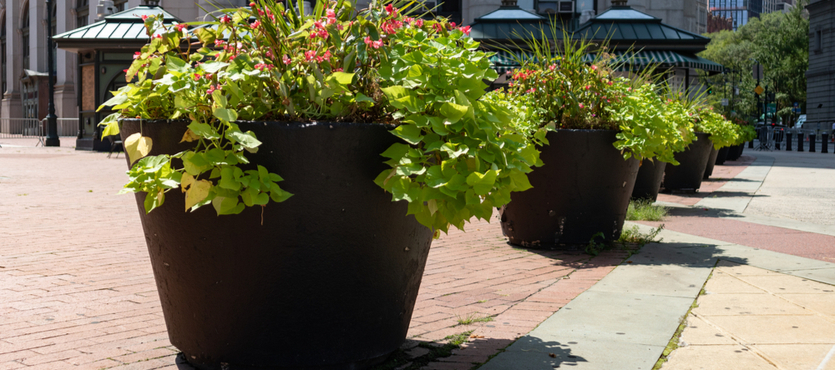 Enhance Your Business with Planters