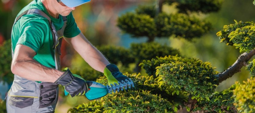 Showcase Your Business with Exceptional Landscaping