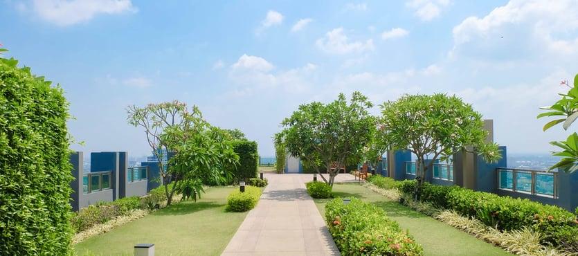 The Environmental Impact of a Rooftop Garden